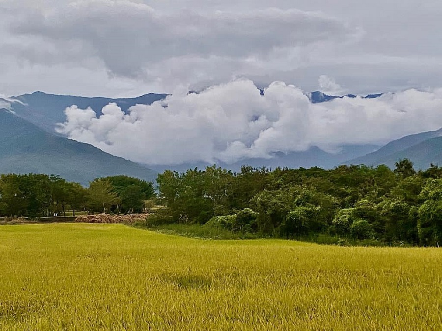 A wheat field in Chishang Township, Taitung County. (Facebook/蔣勳)