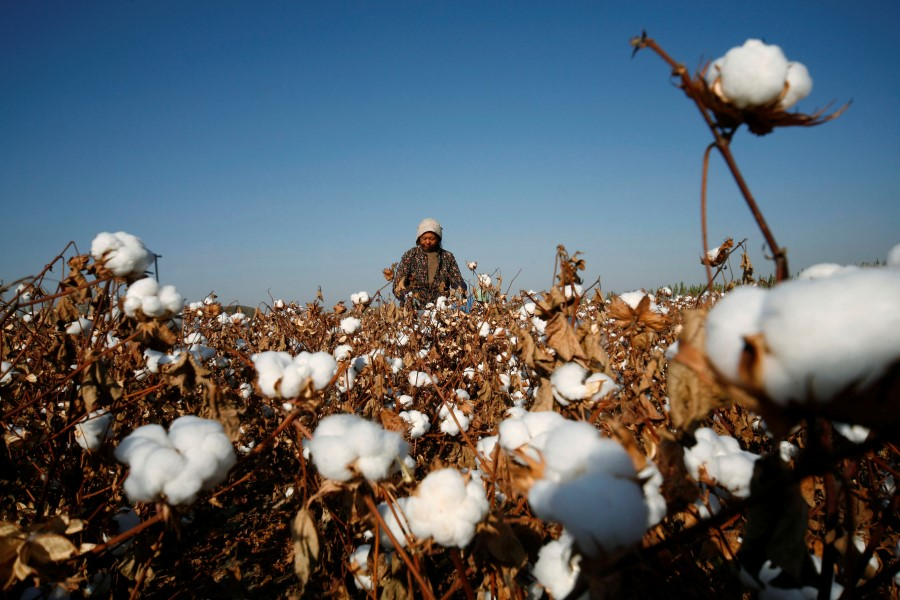 A farmer picks cotton on a farm on the outskirts of Hami, Xinjiang Uighur Autonomous Region, 3 November 2010. (Stringer/Reuters)