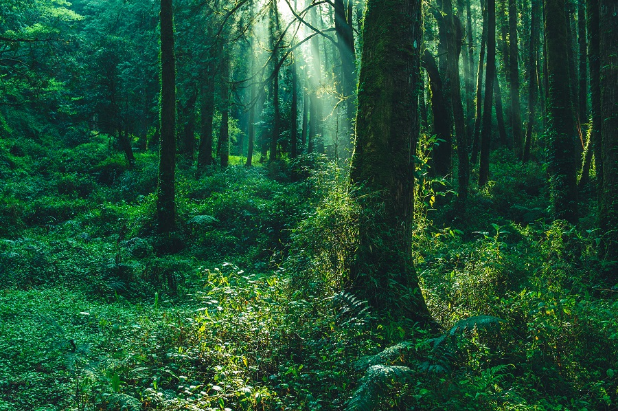 Cicada songs fill the forest in the summertime. (iStock)