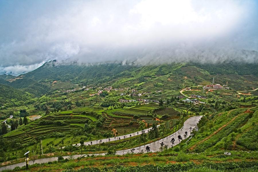 Tea fields in Anxi. (iStock)