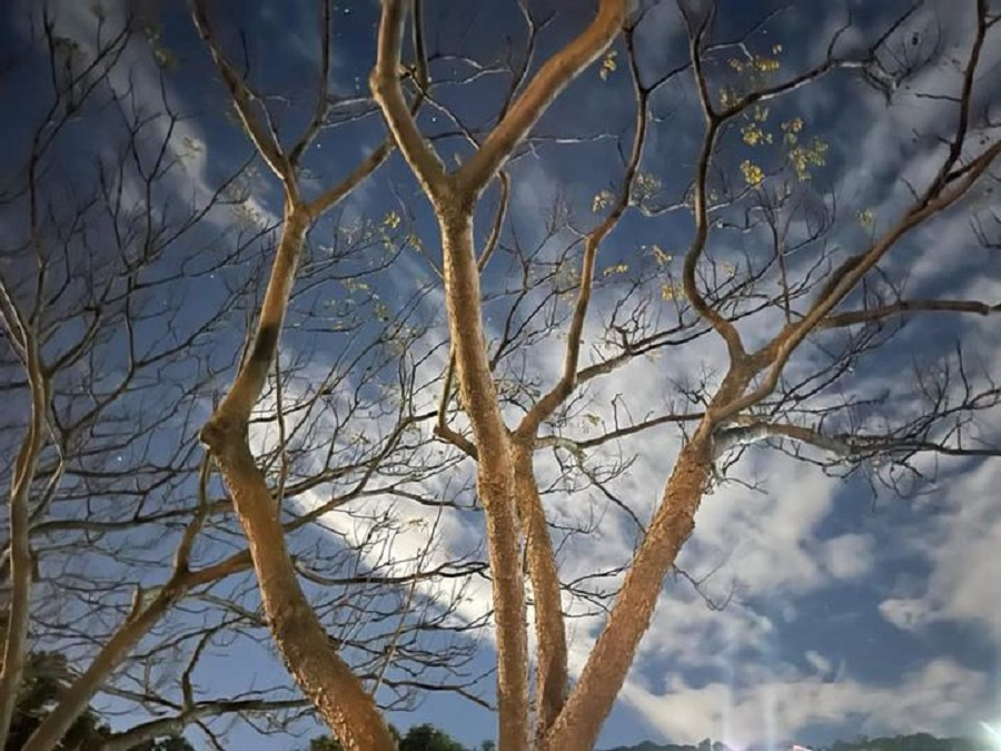 A bald winter tree along the river. (Facebook/蔣勳)
