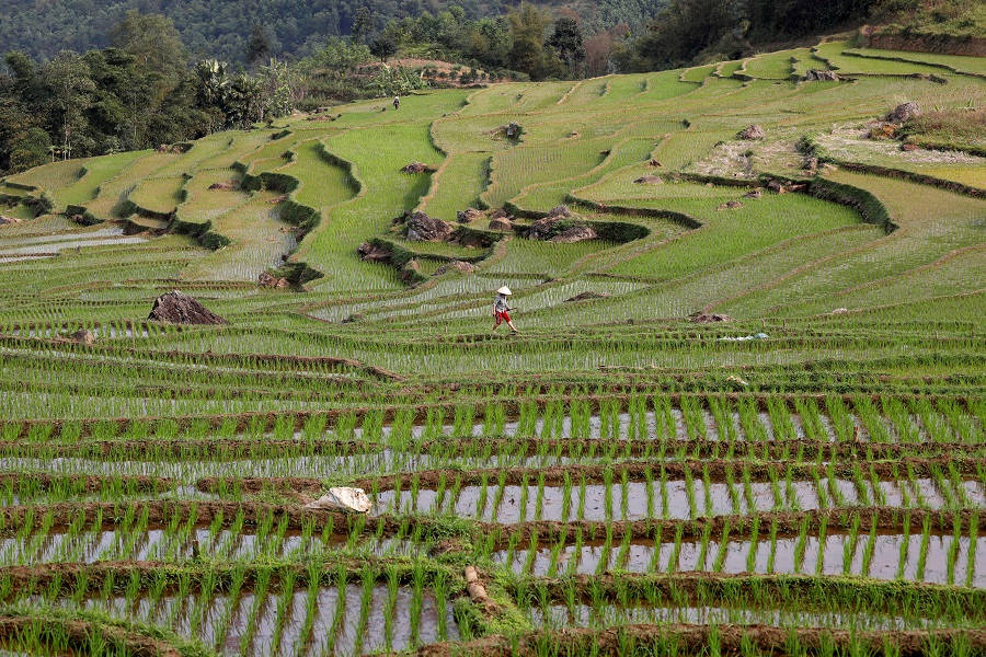 An ethnic Thai farmer works on her terraced rice field in Pu Luong, Vietnam on 29 February 2020. (Kham/File Photo/Reuters)
