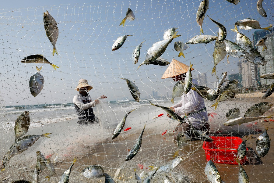 People collect fish on the beach during the coronavirus outbreak in Da Nang, Vietnam, on 6 May 2020. (Kham/Reuters)