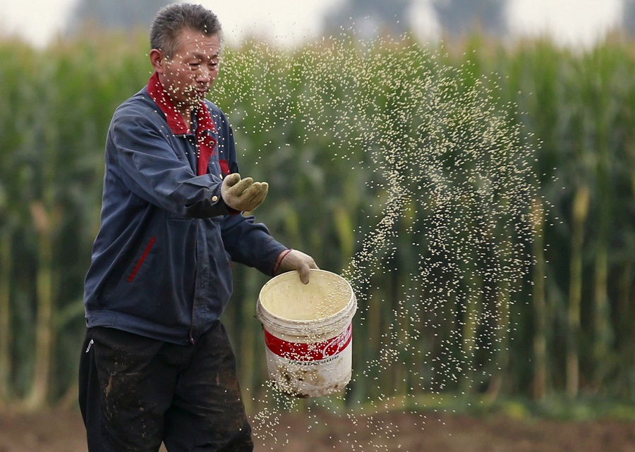 A farmer plants seeds in a corn field at a farm in Gaocheng, Hebei province, China, 30 September 2015. (Kim Kyung-Hoon/File Photo/Reuters)