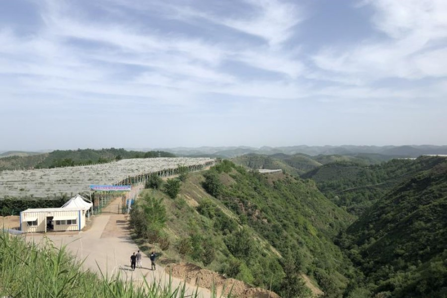 """Since 1999, Yan'an has implemented a """"Grain for Green"""" programme, turning dust and silt into lush foliage over 20 years. (Photo: Yang Danxu)"""