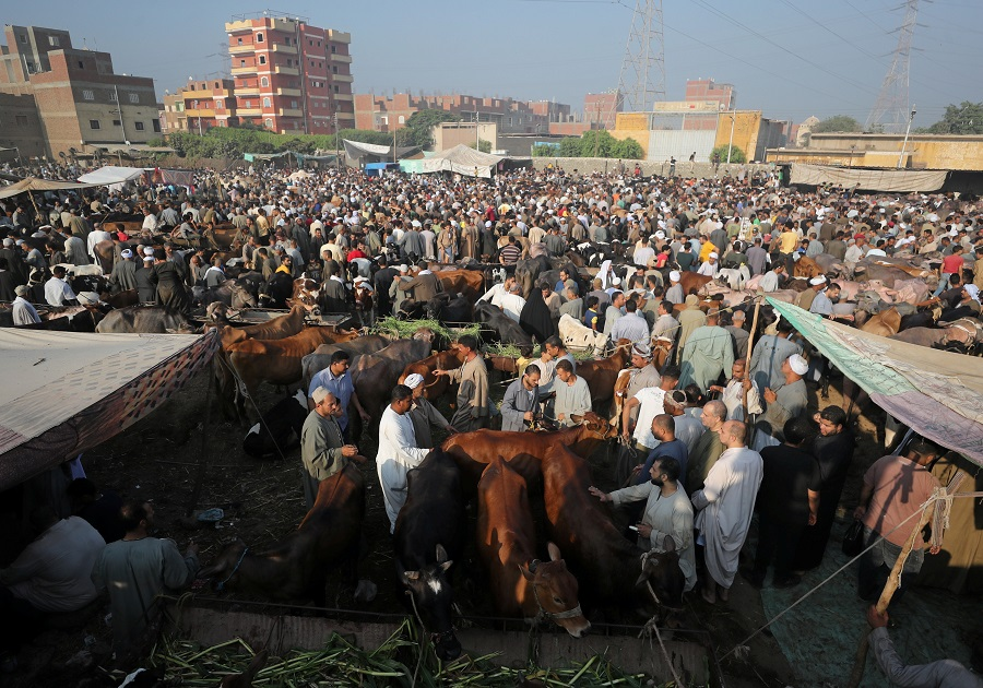 A general view of a cattle market in Al Manashi village, ahead of the Muslim festival of sacrifice Eid al-Adha, in Giza, on the outskirts of Cairo, Egypt, 15 July 2021. (Mohamed Abd El Ghany/Reuters)