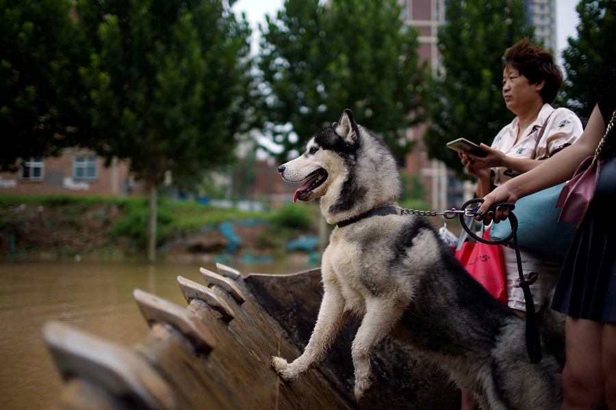 A dog rides with people on a front loader through a flooded road following heavy rainfall in Zhengzhou, Henan province, China, 23 July 2021. (Aly Song/Reuters)
