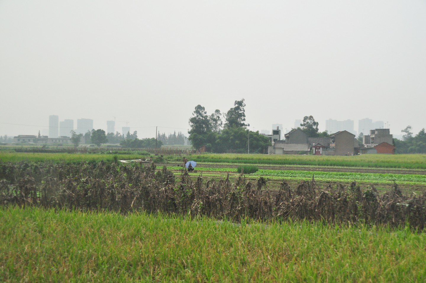 Following economic reforms in rural areas, farmers could now cultivate their private plot of land. (SPH)