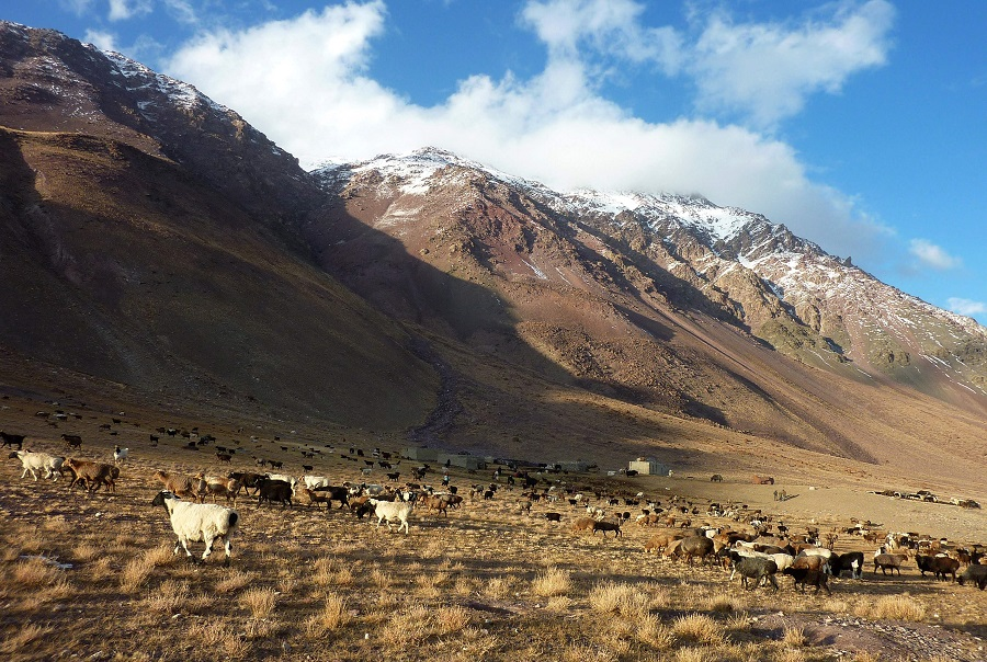 This file photograph taken on 7 October 2017 shows livestock grazing near the Chinese border in the Wakhan Corridor in Afghanistan. (Gohar Abbas/AFP)