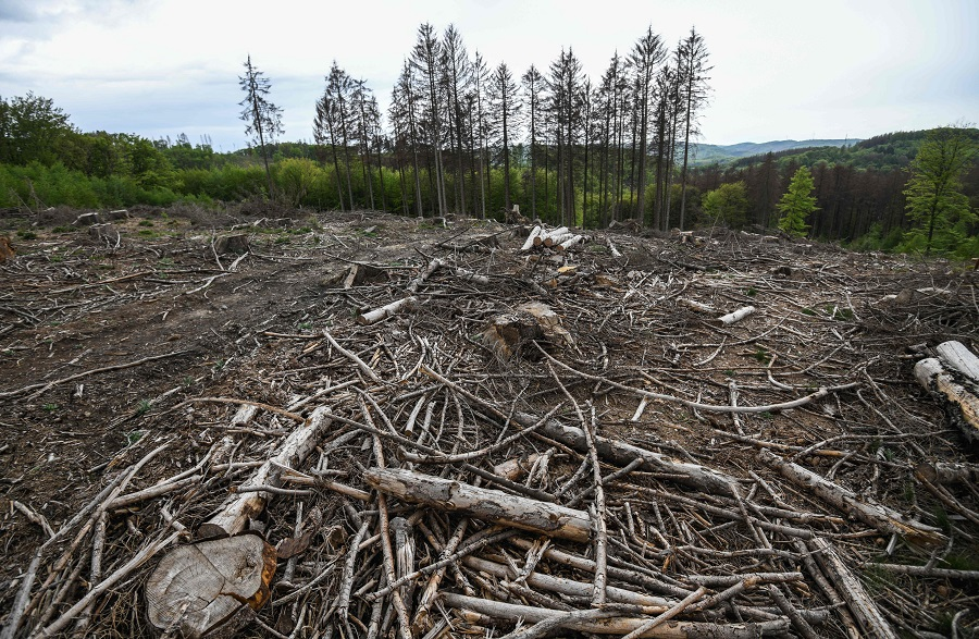 Felled spruce trees suffering from drought stress are seen in a forest near Iserlohn, Germany, on 28 April 2020. (Ina Fassbender/AFP)