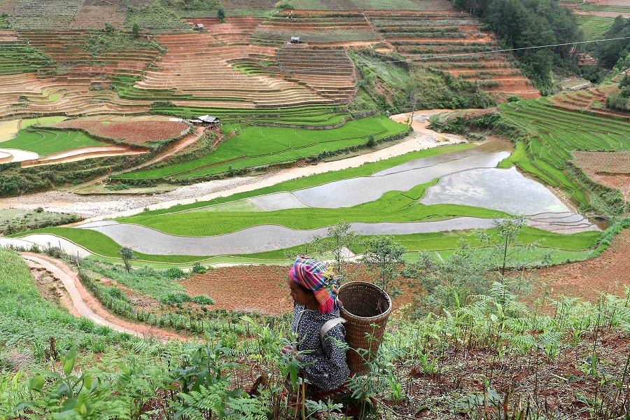 This photograph taken on 1 May 2020 shows an ethnic Hmong woman walking along a hillside in Vietnam's northern agricultural province of Yen Bai. (Nhac Nguyen/AFP)