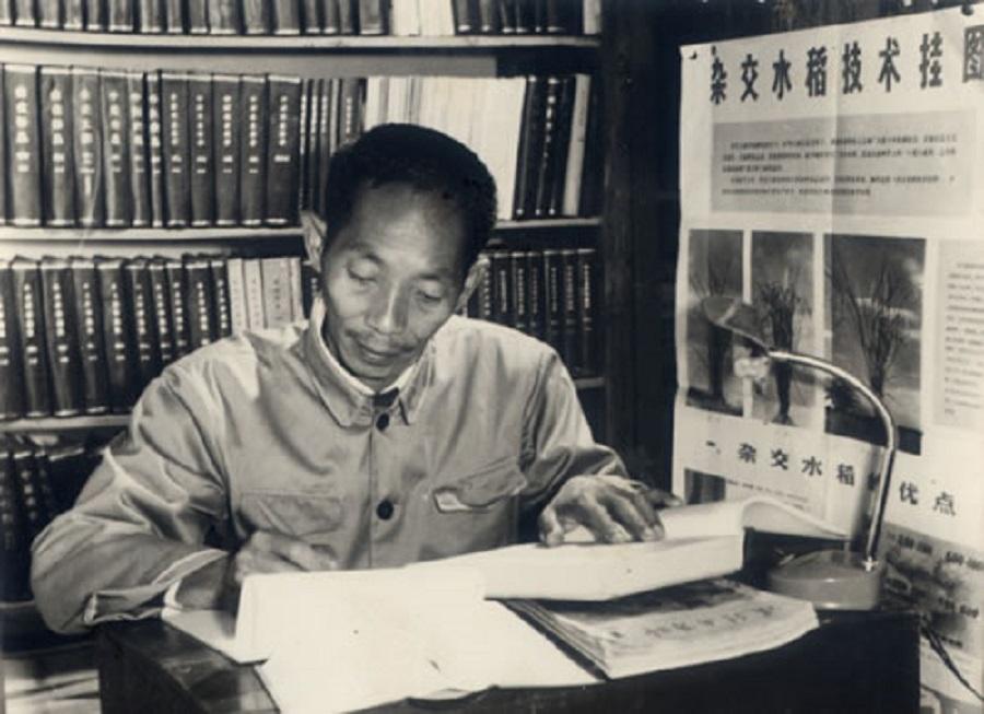 Yuan Longping, 1962. (Wikimedia)
