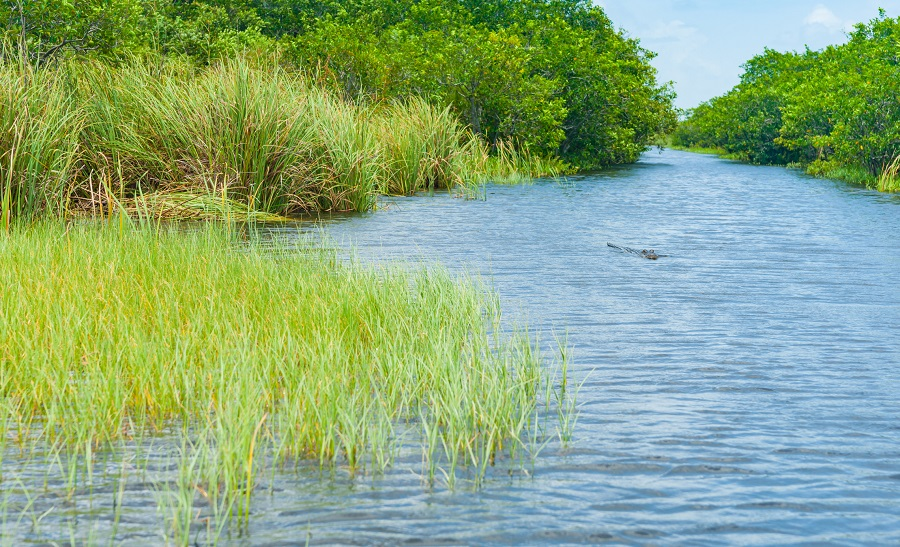 Green grass by the river bank. (iStock)