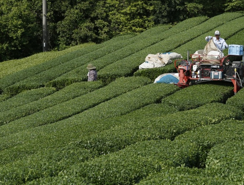 A worker operates a harvester machine at a tea plantation in Minamiyamashiro, Kyoto, Japan, on 14 May 2021. (Buddhika Weerasinghe/Bloomberg)