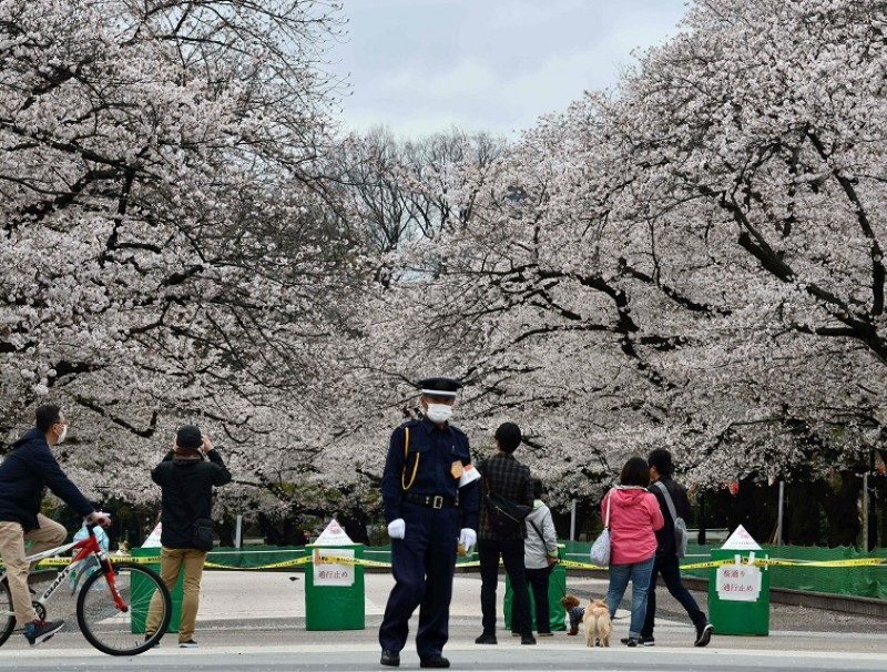A secury guard (center) stands at a closed cherry blossom viewing spot in Tokyo's Ueno park on 28 March 2020. (Kazuhiro Nogi/AFP)