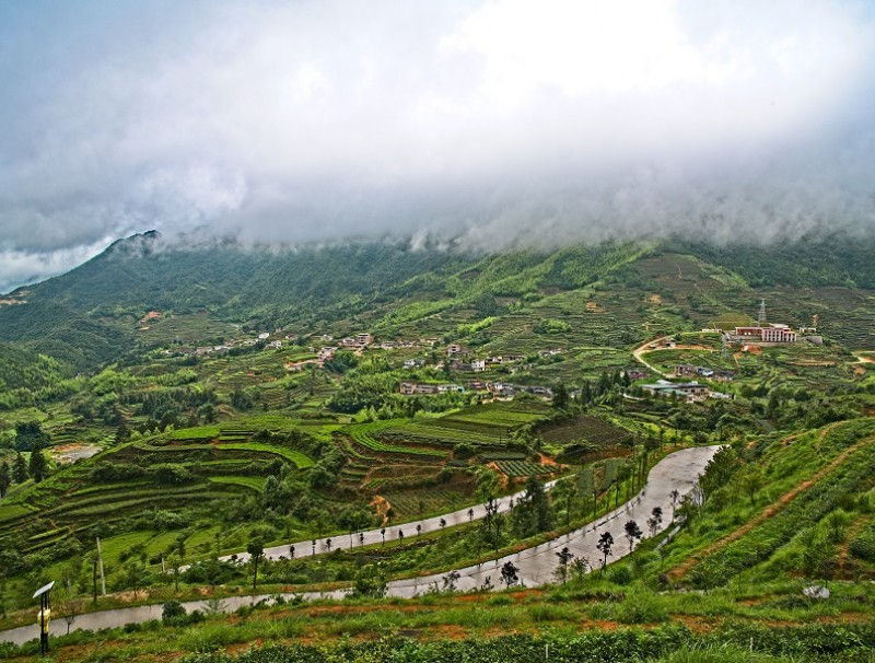 Tea fields in Anxi. (iStock)