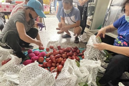 Mainland China has halted imports of sugar apples and wax apples from Taiwan due to checks that revealed pests on the fruits. (CNS)