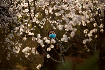 A woman wearing a protective mask looks at blossoms in a park in Beijing on 21 March 2020. (Thomas Peter/File Photo/Reuters)