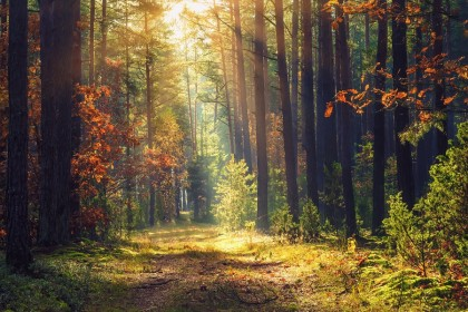 What colour is autumn's scent? (iStock)